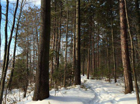 Parc_Ile_Melville_Raquette_neige